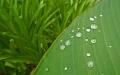 giardino-pioggia