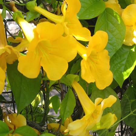 Giardino esotico progettare giardini for Pianta rampicante sempreverde