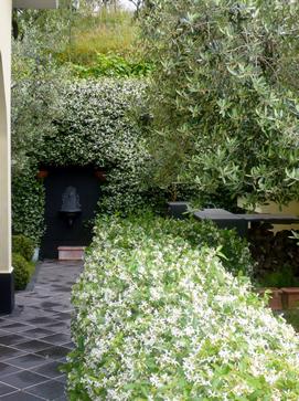 Sinfonia in bianco ai colli della spezia progettare giardini for Giardini case di campagna
