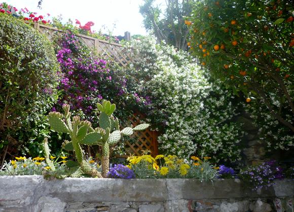 un piccolo giardino nel centro storico della spezia ? progettare ... - Come Impostare Un Piccolo Giardino